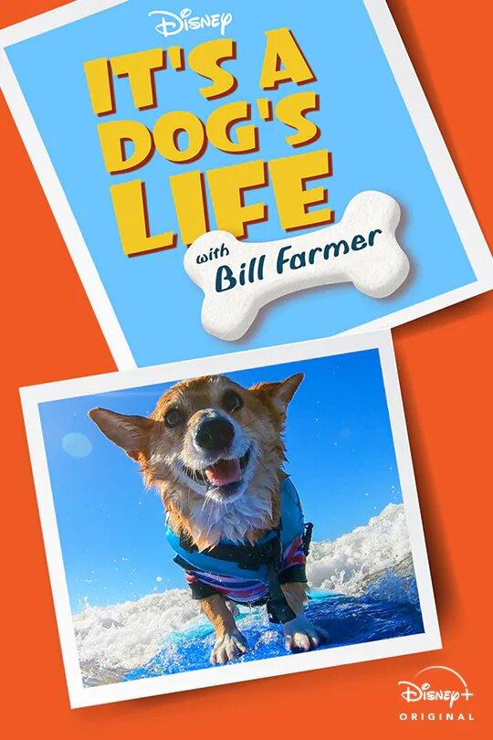 Watch Movie it-s-a-dog-s-life-season-1