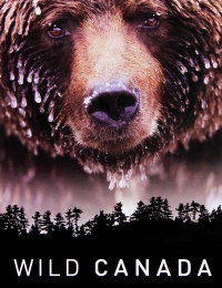 Watch Movie kodiak-season-1