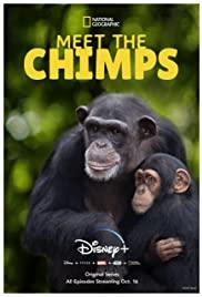 Watch Movie meet-the-chimps-season-1