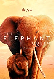 Watch Movie the-elephant-queen