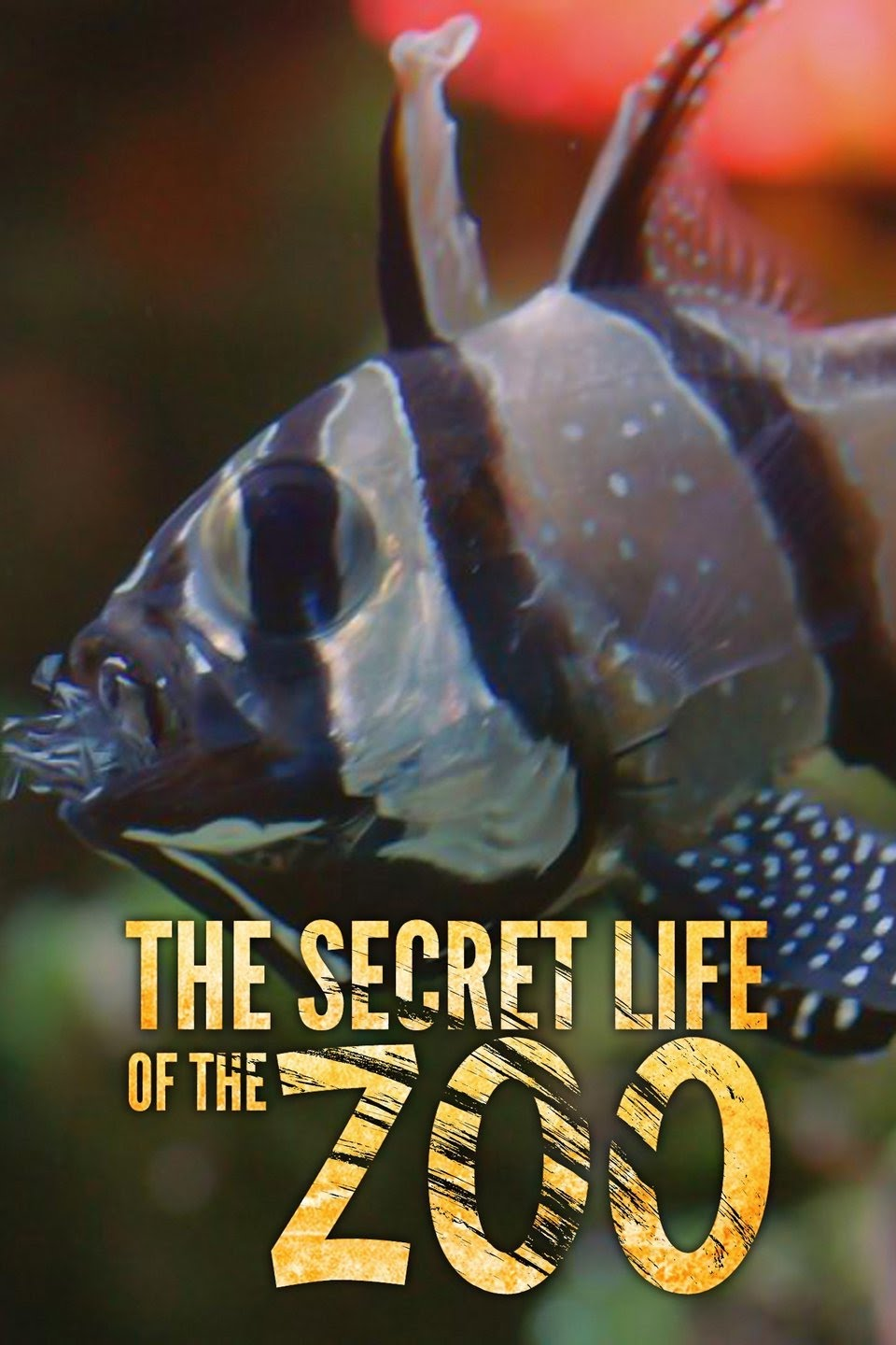 Watch Movie the-secret-life-of-the-zoo-season-3