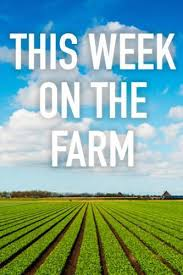 Watch Movie this-week-on-the-farm-season-1
